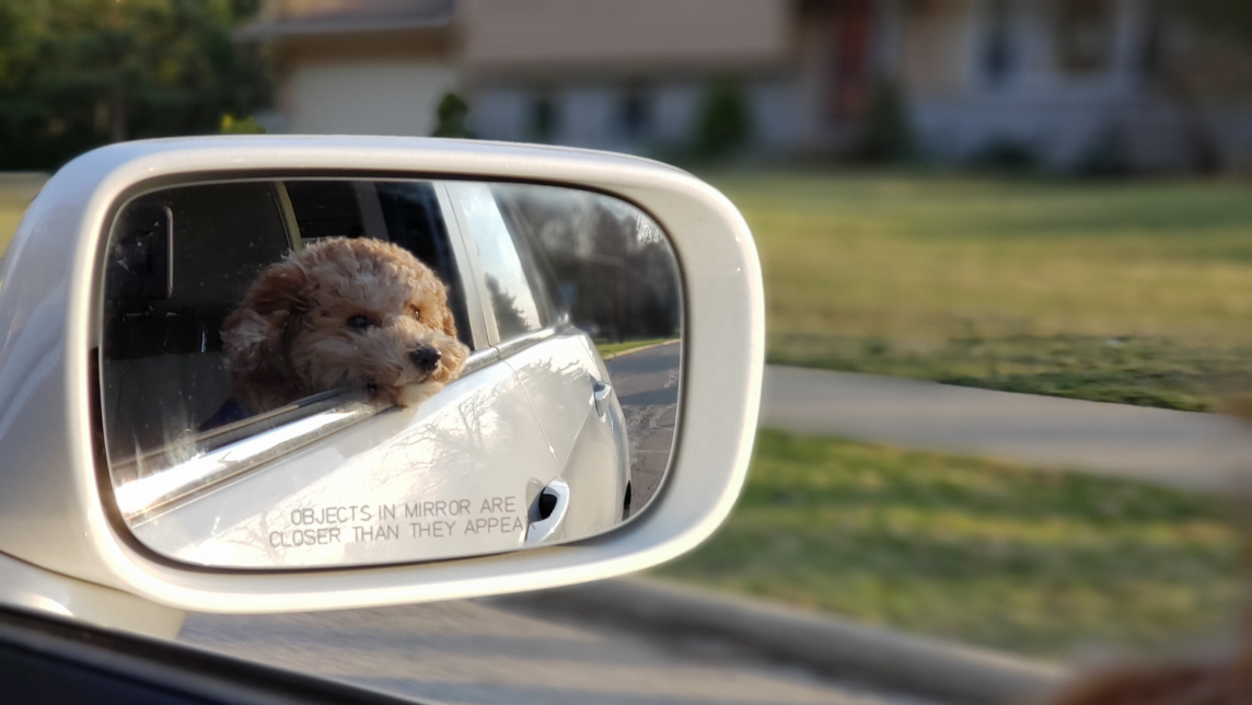 moving-your-dog